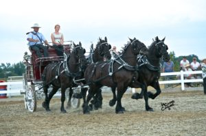 Essa National Draft Horse Show