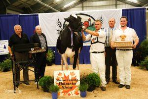 Simcoe County Holstein Show
