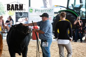 Limousin Beef Show