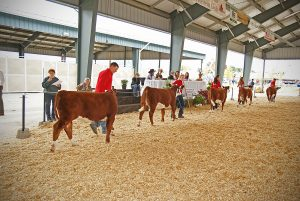 Hereford Beef Show
